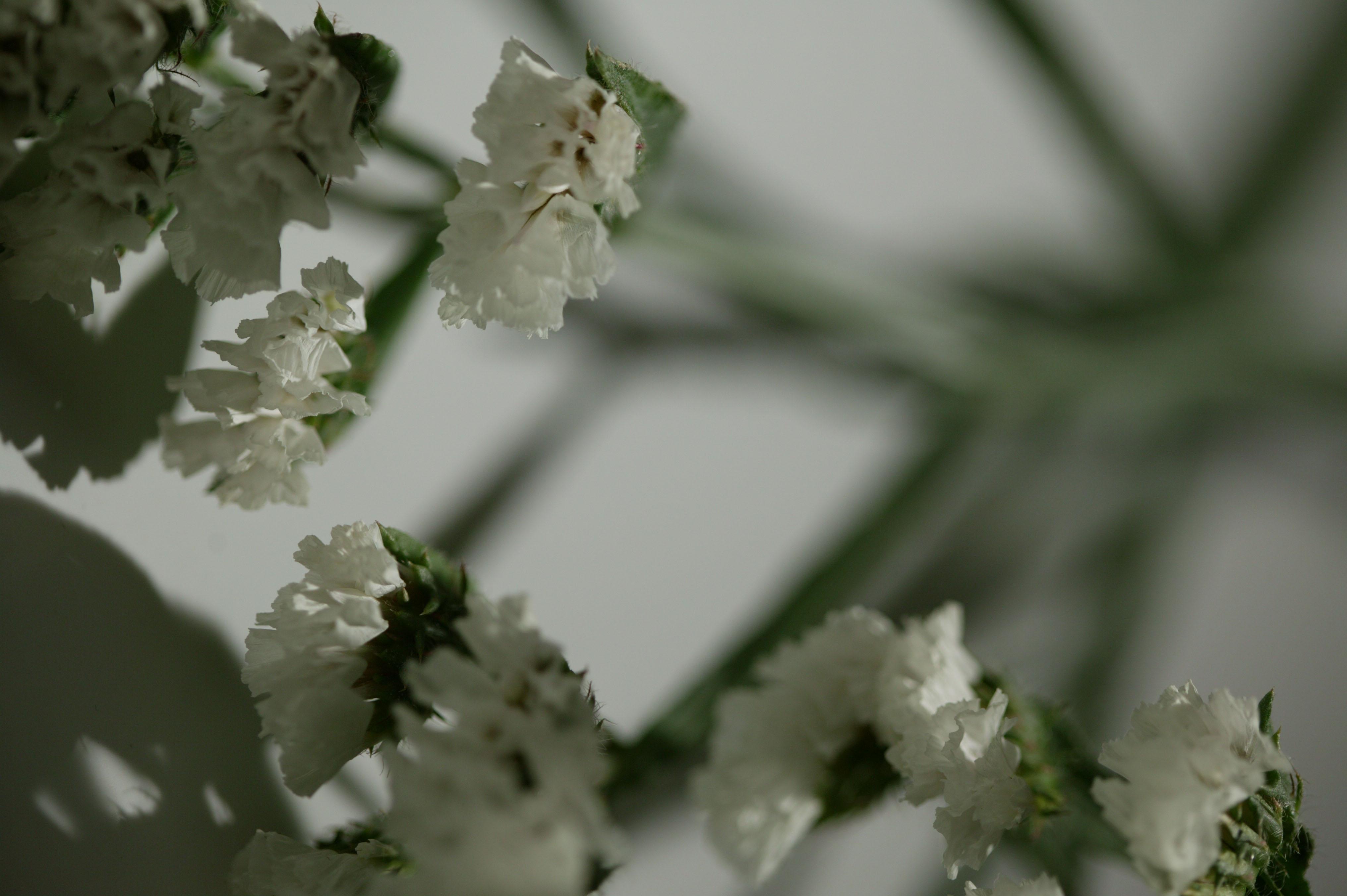 Gypsophila information from flowers gypsophila flower mightylinksfo Images
