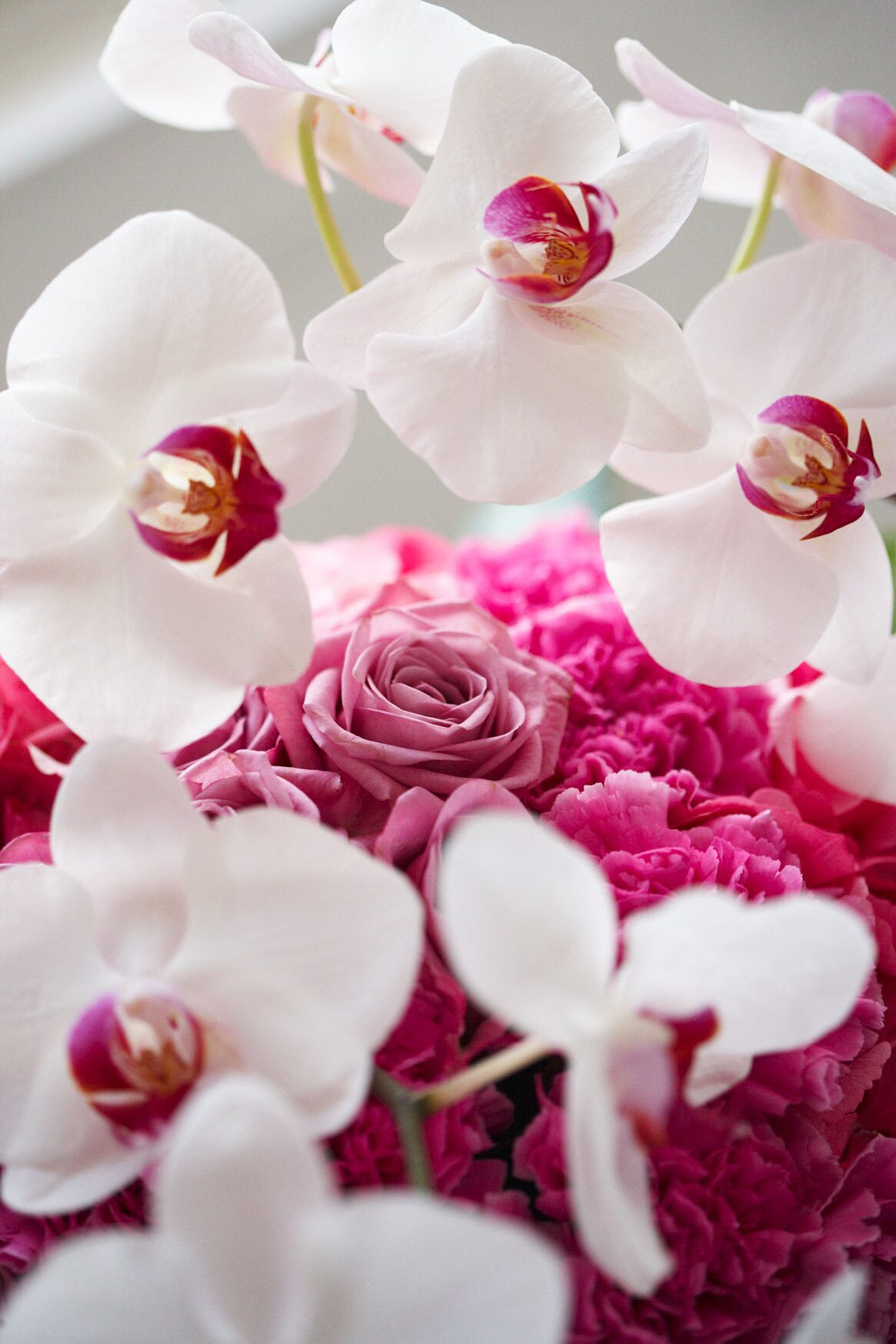 Phalaenopsis Orchid Information From Flowers