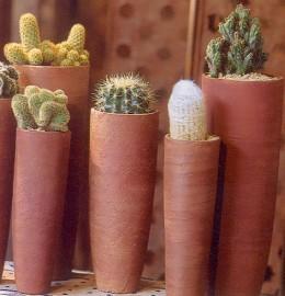 Cacti Mediterranean