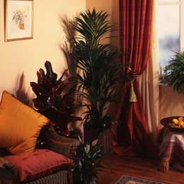 Palm Ethnic