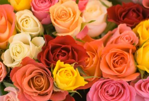 A group of different coloured roses