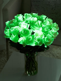 Interflora Launch Glow In The Dark Roses Flowers Org Uk