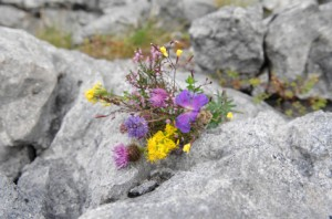 Irish Wildflowers