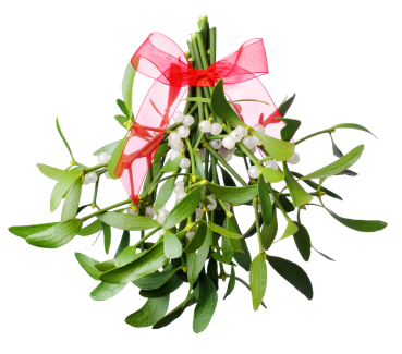 Image result for mistletoe