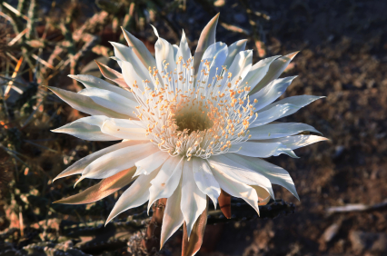 rare and endangered flowers flowersorguk